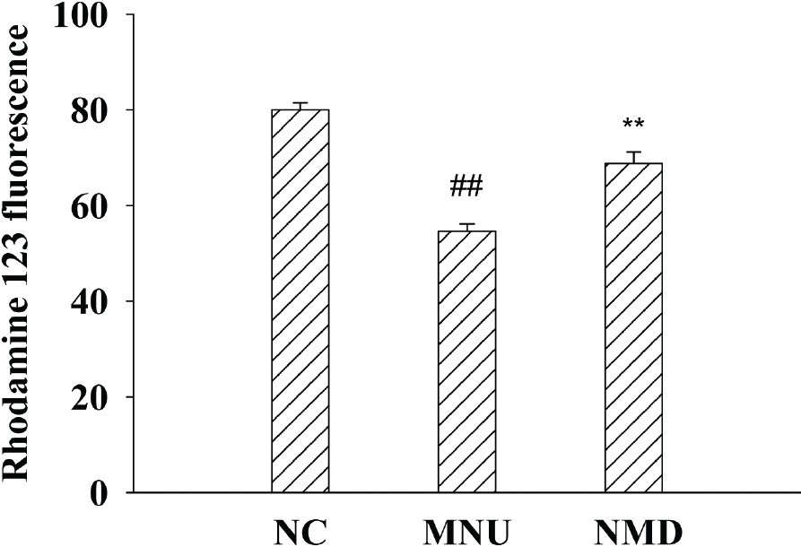 Figure 4: Effects of NMD on MNU-induced ΔΨm of retinal mitochondria. ΔΨm of retinal mitochondria was calculated according to the measured values of flow cytometry. Data are expressed as mean ± standard error (<i>n</i> = 6), ##<i>P</i> < 0.01 versus NC, **<i>P</i> < 0.01 versus MNU